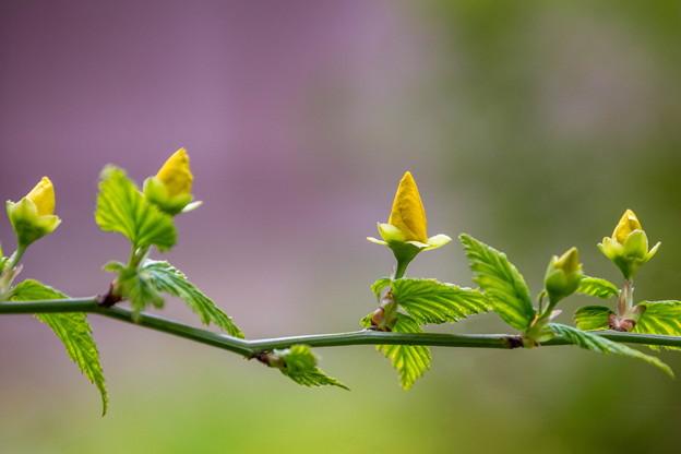 裏庭の花2