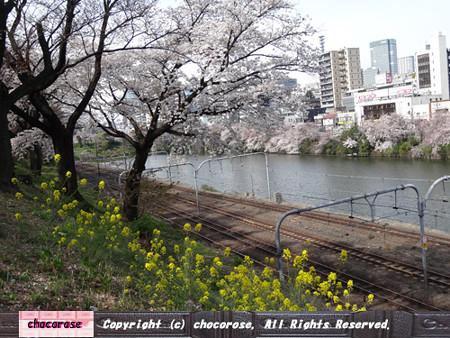 桜と菜の花、電車の通り過ぎたあと