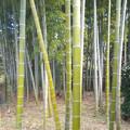 Photos: なんと、竹林まで