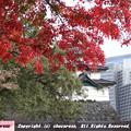 Photos: 紅葉と富士見櫓の先の大手町のビル群