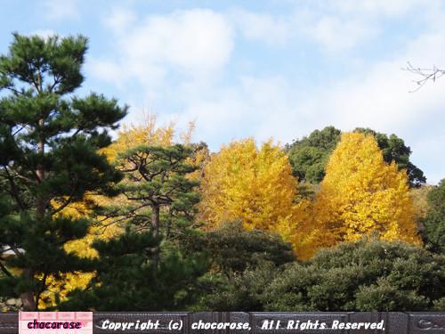 大きな銀杏の樹