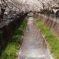 Photos: Sakura_1257