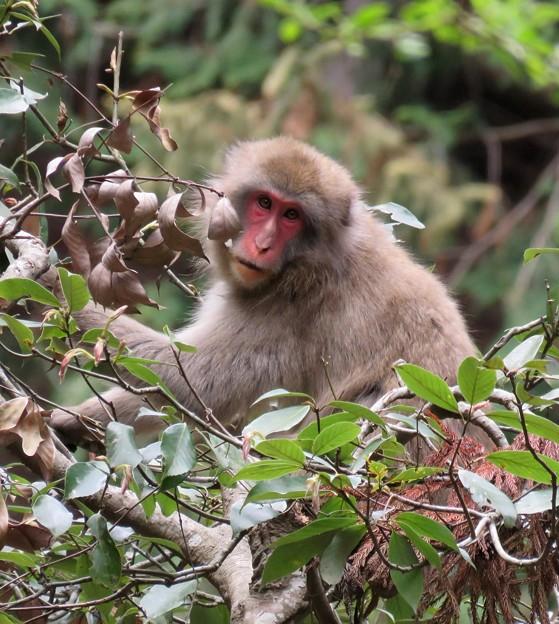 お山のお猿さん