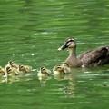 Photos: 7羽が巣立つ