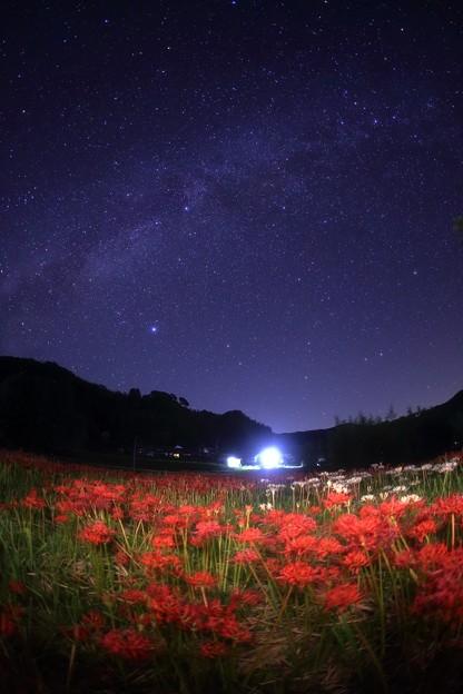 Photos: 天の川と柊野彼岸花