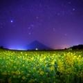 星降る菜の花畑
