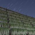 Photos: オリオン座と寒干し大根