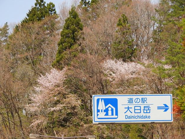 桜に間に合った