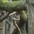 写真: 桜林で