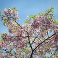 Photos: 送春花 06