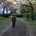 Photos: 花散らしの風 07