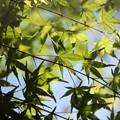 新緑の候 01
