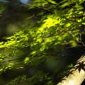 新緑の候 04