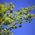 新緑の候 06