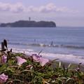 Photos: 江の島&ハマヒルガオ