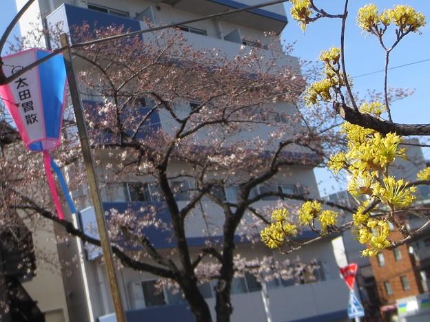 黄色い花@ぶんさく180322