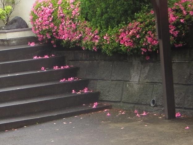 階段@つつじ180524