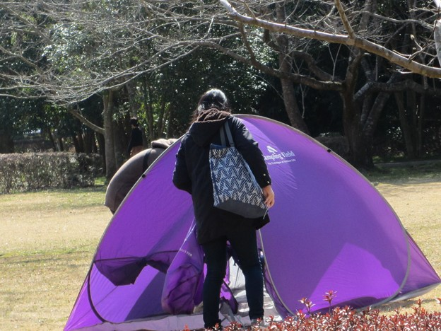 テント@紫200224