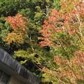 Photos: 紅葉2020@と201027