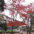 Photos: 紅葉2020@じょ201125