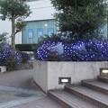 Photos: イルミ@えじ210109