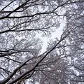写真: 雪景色2