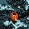 写真: 水面の灯り