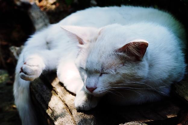 木陰で昼寝