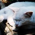 写真: 木陰で昼寝