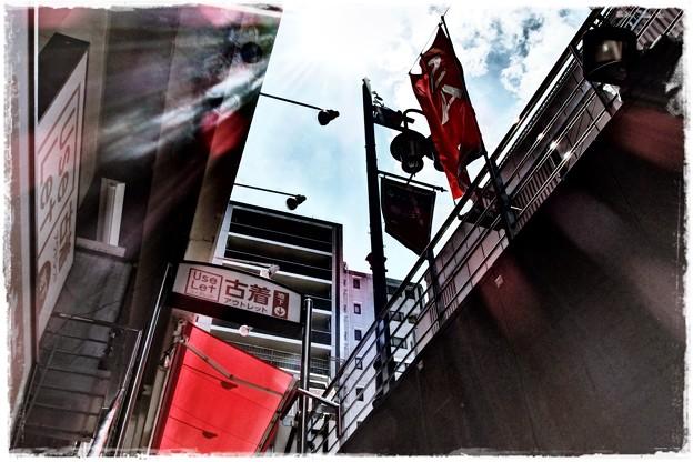 Photos: 日差し