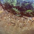 写真: 魚目線