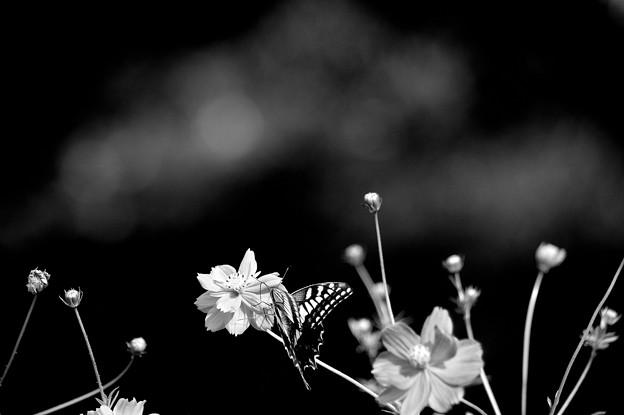 Photos: 白と黒