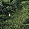 写真: 山を翔ぶ
