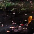 Water Magic (2)