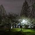 Photos: 静かな夜