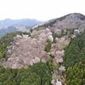 Photos: 山桜を眺めて