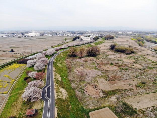 桜、上空の旅 (2)