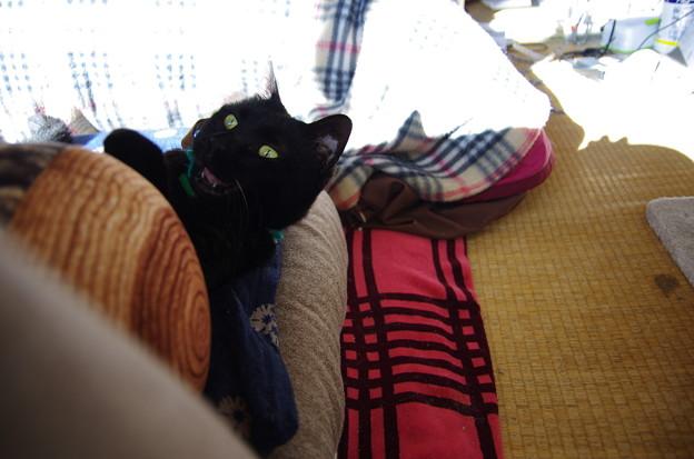写真: 丸太黒猫