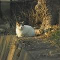 野川公園の野良1