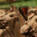 写真: 兵馬俑の馬@小鹿野