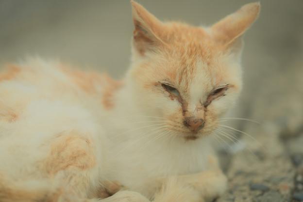 顔が汚い猫1@関宿