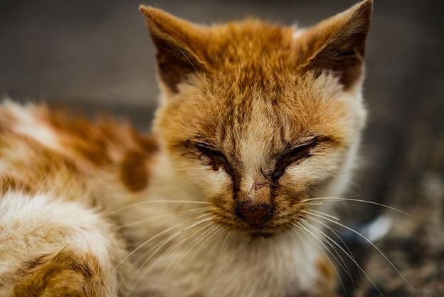 顔が汚い猫2@関宿