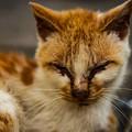 写真: 顔が汚い猫2@関宿