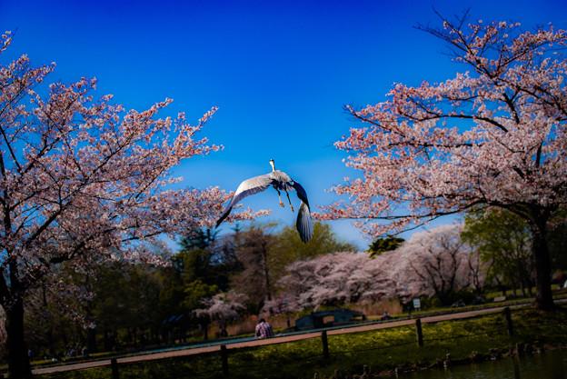 飛ぶ鳥2@行田・水城公園