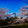 Photos: 飛ぶ鳥2@行田・水城公園