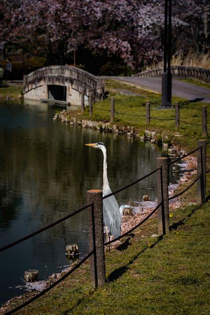 Photos: 鳥@行田・水城公園