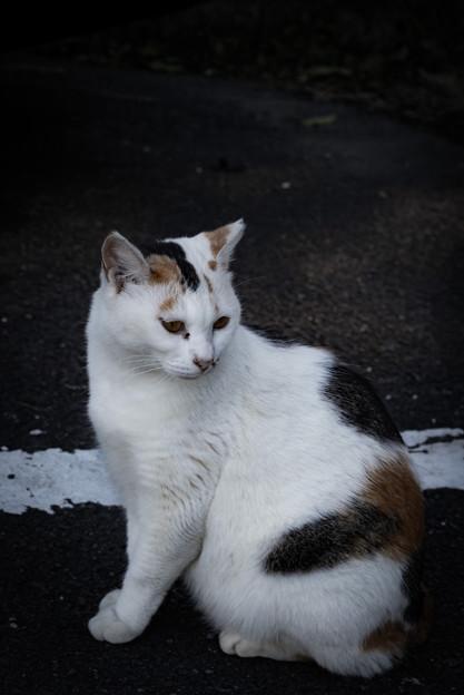 振り返る猫@八丁湖