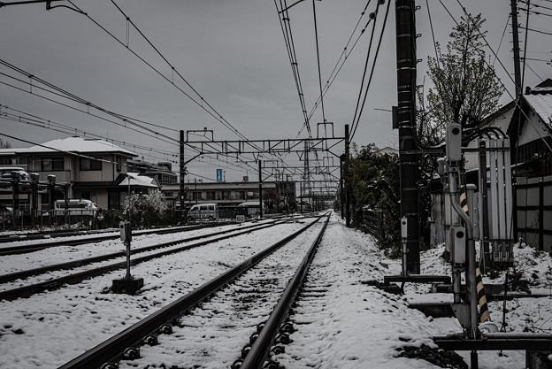 季節外れの雪@桶川
