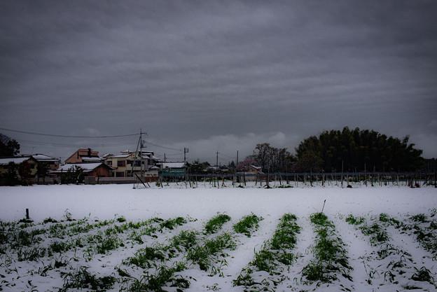 季節外れの雪2@近所