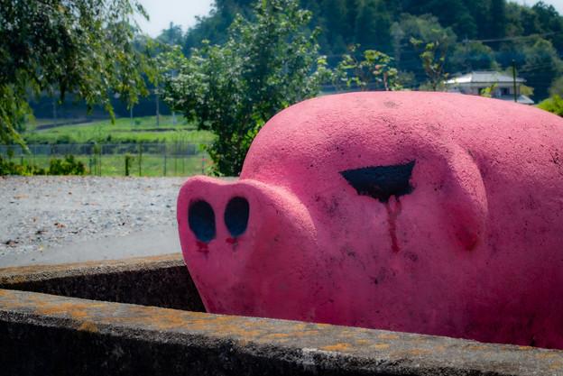ピンクな豚1@嵐山
